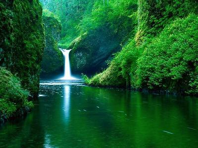 selva de verde belleza